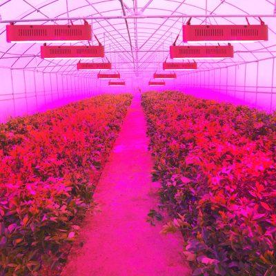 led apšvietimas augalams daiginti auginti 300W_2