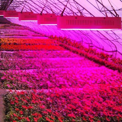 led apšvietimas augalams daiginti ir auginti_6