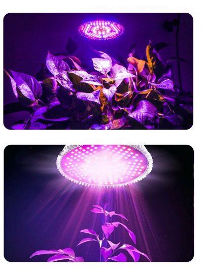 led lempa augalams auginti 80W_6