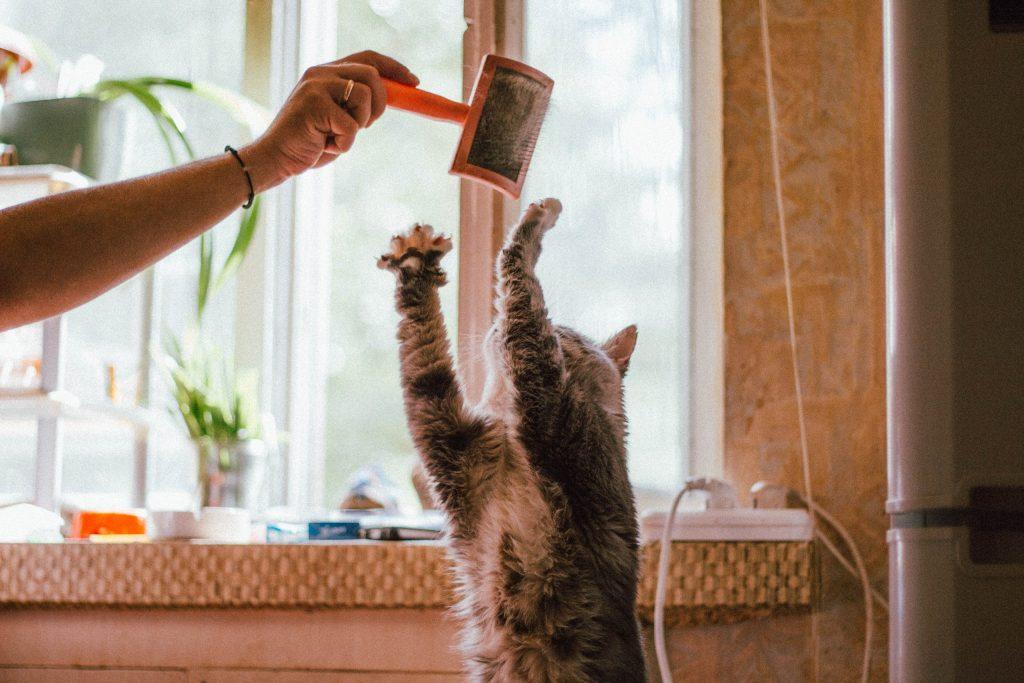 Ar eteriniai aliejai tinka katėms